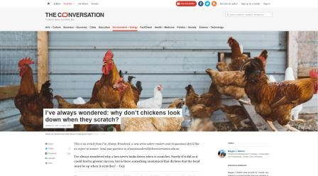 Why chickens don't look down