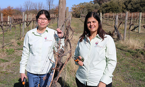 Research to better manage grapevine trunk disease