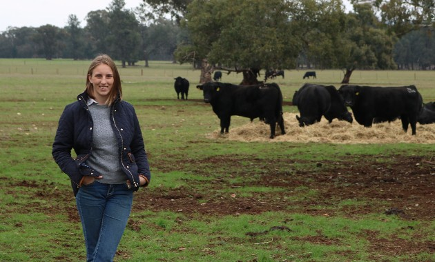 Survey shows beef producers want more information about hydatid disease