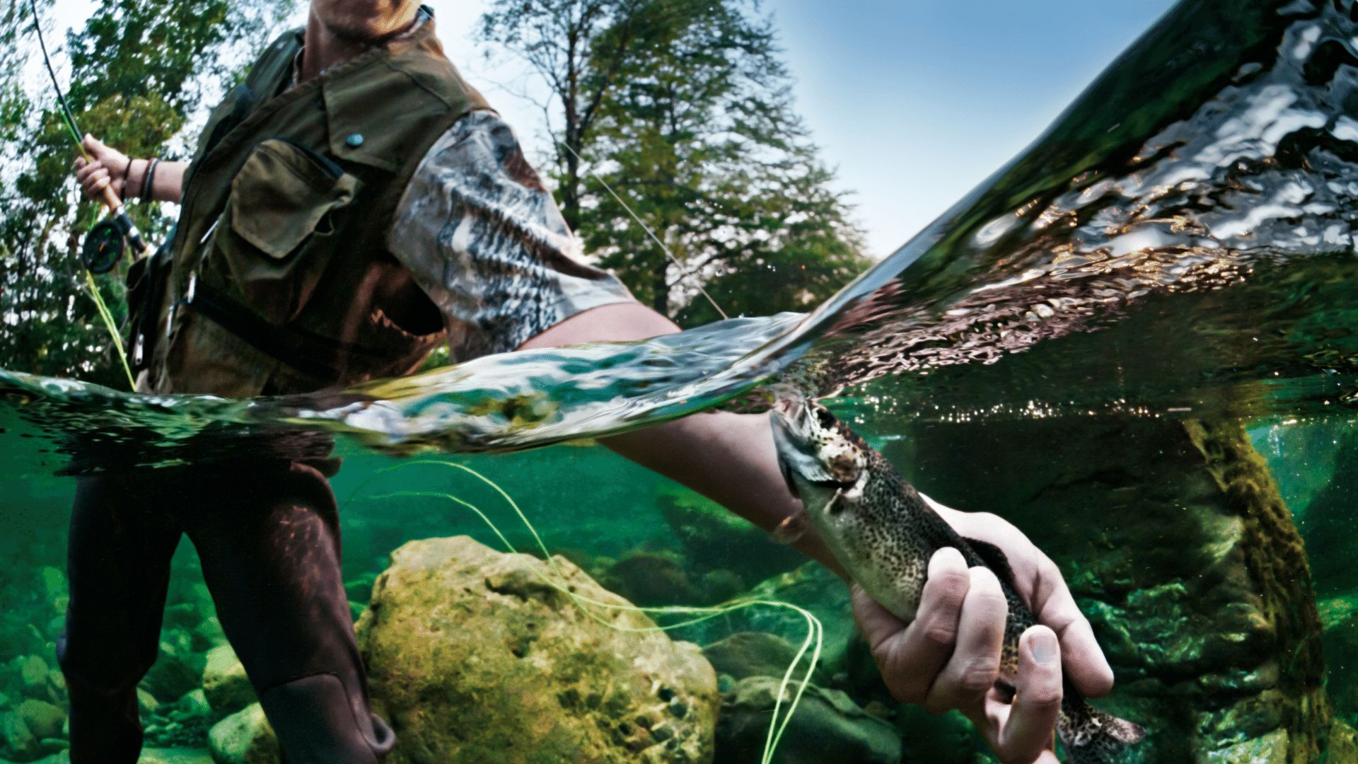 Interested in fish conservation and management? Drop us a line