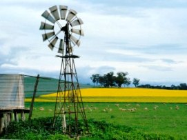Windmill in a paddock with a crop of canola in the background.