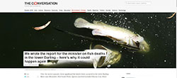 The COnversation - Fish deaths in the Darling