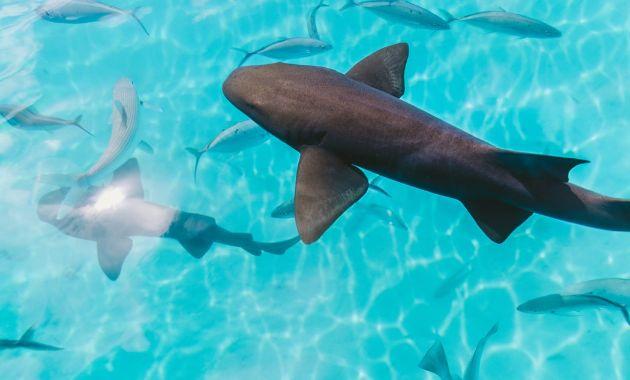 Researchers seek participants for shark conservation and management