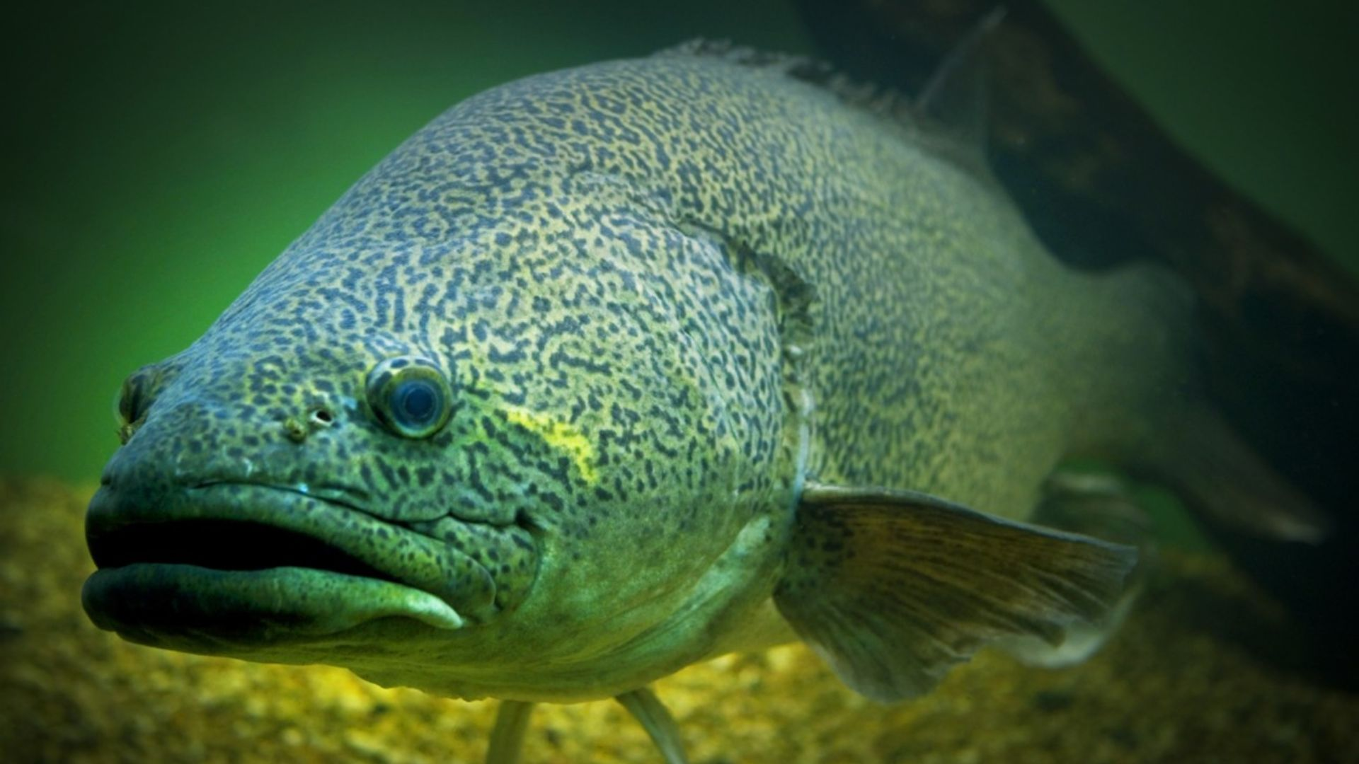 A year on from the Menindee fish kills, what's been done to avert another crisis?