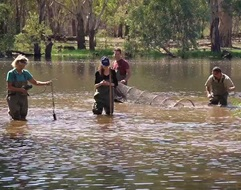 Rehabilitation of Sunshower lagoon project netting