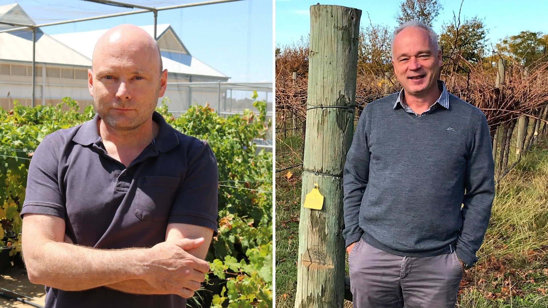 International recognition for viticulture research