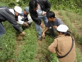 Extension staff discuss fodder management during study tour