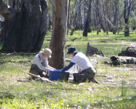 Dr Skye Wassens on field trip in the Lowbidgee