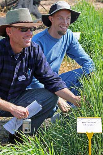Two men squatting next to a sample from a trial plot