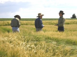 Three men standing in a crop