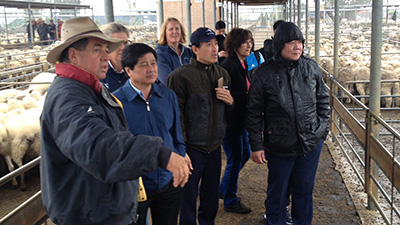 The visit include a tour of the saleyards