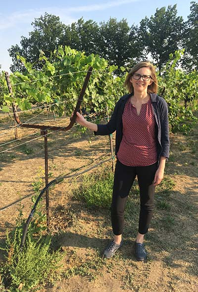 Dr Rogiers in a research vineyard at the Washington State University campus in Richland showcasing a number of trellising systems