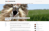 The Conversation - Endangered bunyip bird