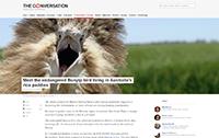 The Conversation - Endangered bunyip bird