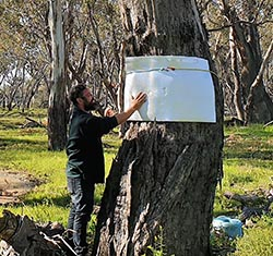 Bark covers to survey for arboreal reptiles