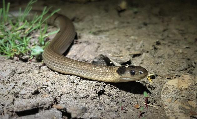 Charles Sturt study into rare animal sighting in Murrumbidgee wetlands