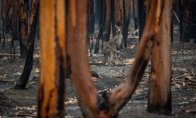 Why wildlife flee from some dangers, but not others
