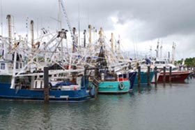Fishing boats in Port Lincoln, SA. Photo: FRDC