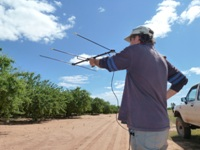 Radio tracking in almond orchard