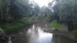 Lachlan River at Forbes