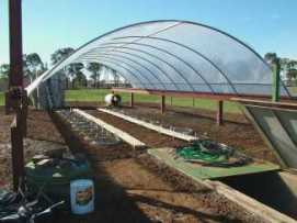 Test plots growing in a greenhouse