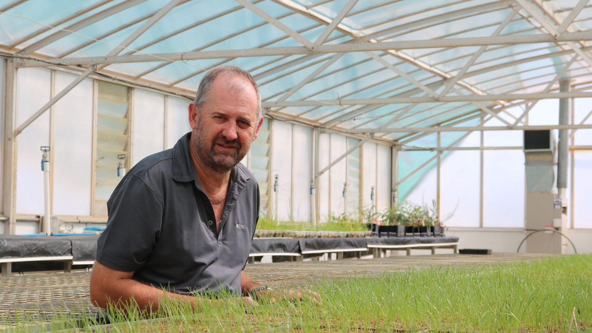 CSU Research: Link discovered between herbicide resistance and cropping practice