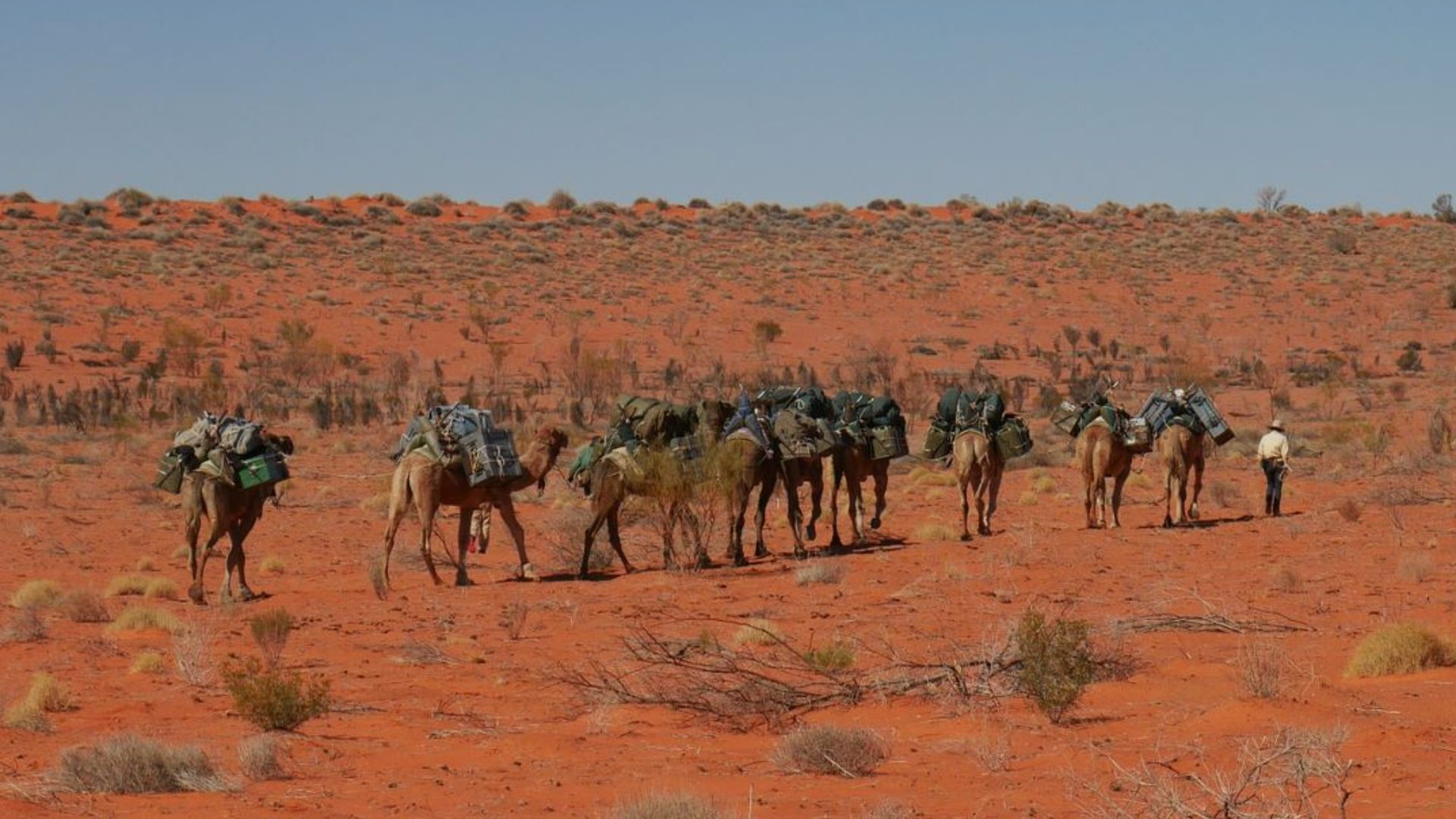 Students trek with camels across Simpson Desert to help with scientific surveys