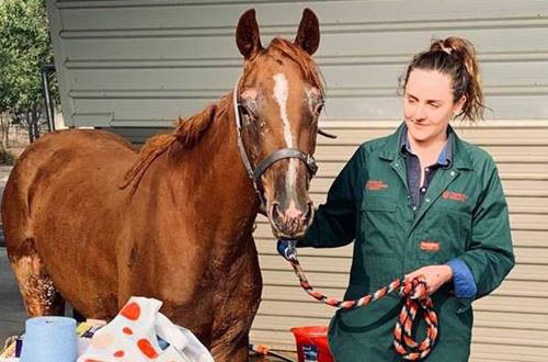 VCC Emergency Bushfire Veterinary Treatment Fund