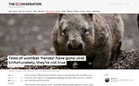 Wombat heroes