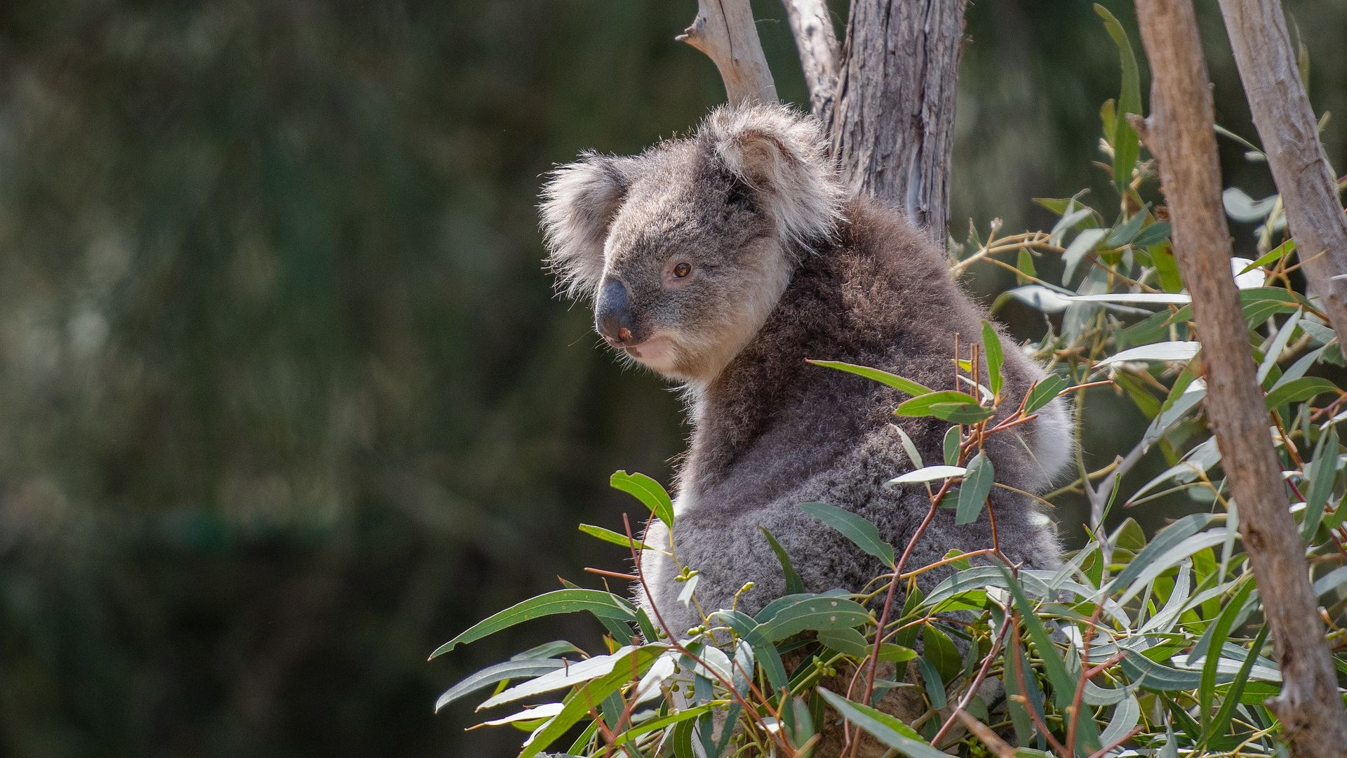 COVID-19, bushfires and drought prove wildlife health is one of the emerging challenges of our time