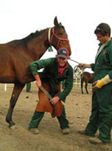 Matthew Peterson and James O'Connor practise their Hoof-trimming skills during a practical class