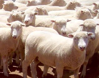 Enhancing the profitability of sheep and wool producers will be a focus of an Agribusiness forum hosted by Charles Sturt University.