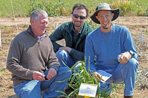 Three men squatting next to a sample from a trial plot