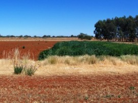 View of a red soil landscape