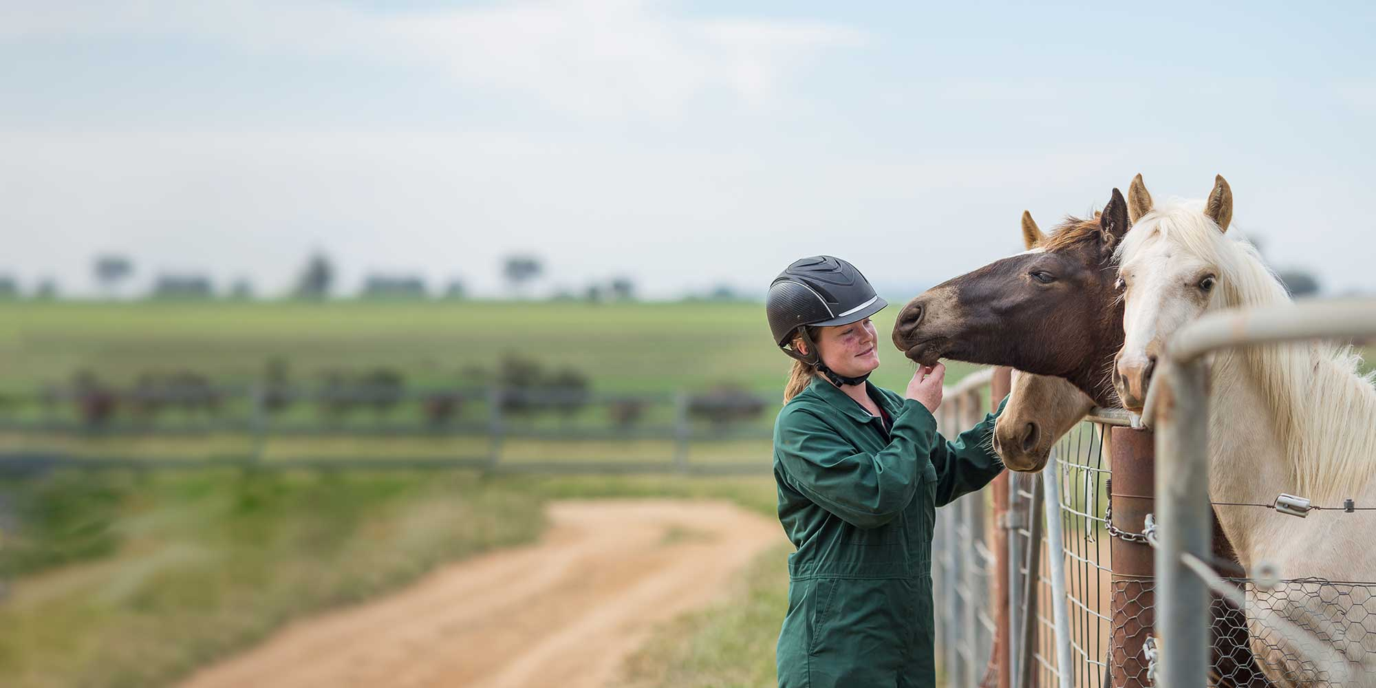 Bachelor of Equine Science (with specialisation) - Study