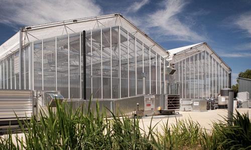 GRDC Glasshouses