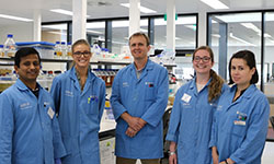 CSU research: How Hendra and Nipah viruses hijack nuclear trafficking machinery in human cells