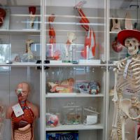 Anatomical models and collection thumbnail