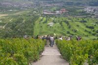 Terraced vineyards in Sion Valais, Switzerland