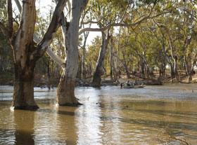 Colligen Creek