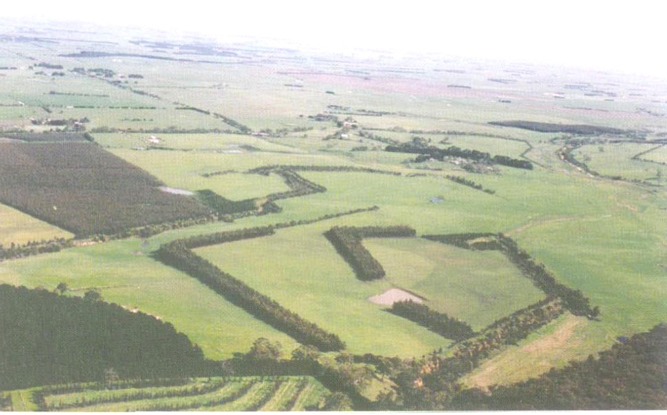 Aerial view of agricultural plantations