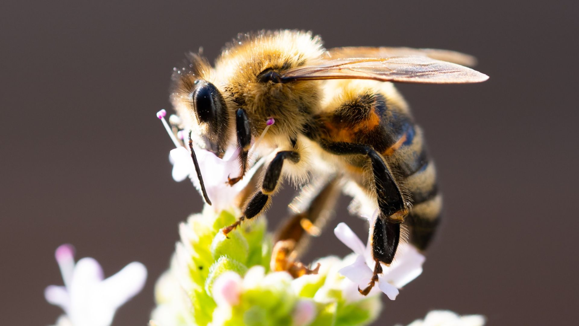 Nature's bee all and end all: Why 'Winged wonders' must be protected from threats