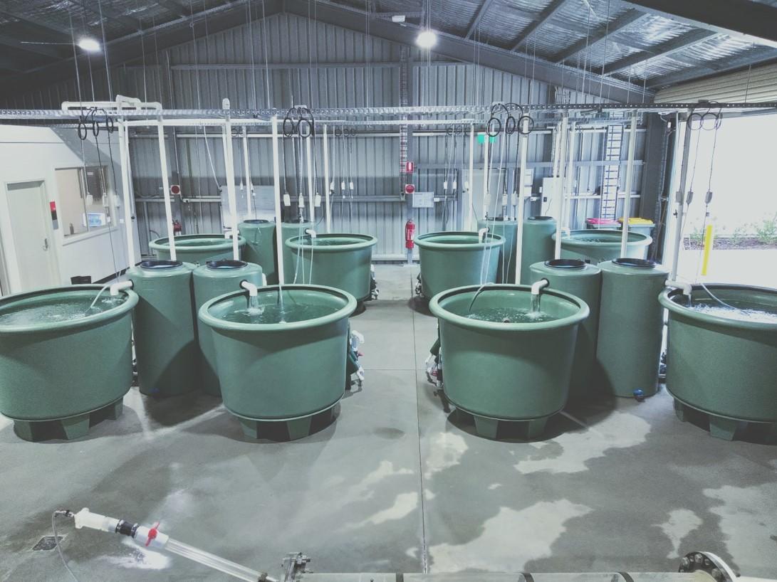 ILWS aquatic research facility