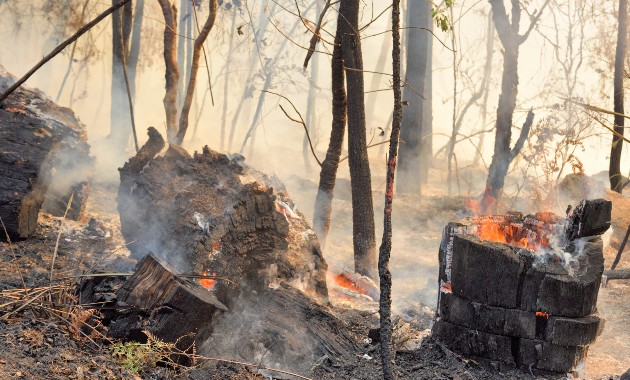 Three billion animals affected is a true measure of effect of Australian bushfires