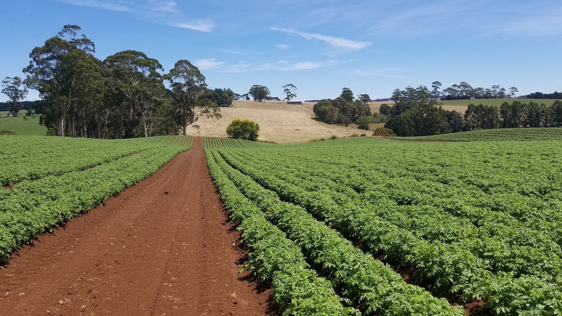 National Agriculture Day: A spotlight on Charles Sturt's researchers