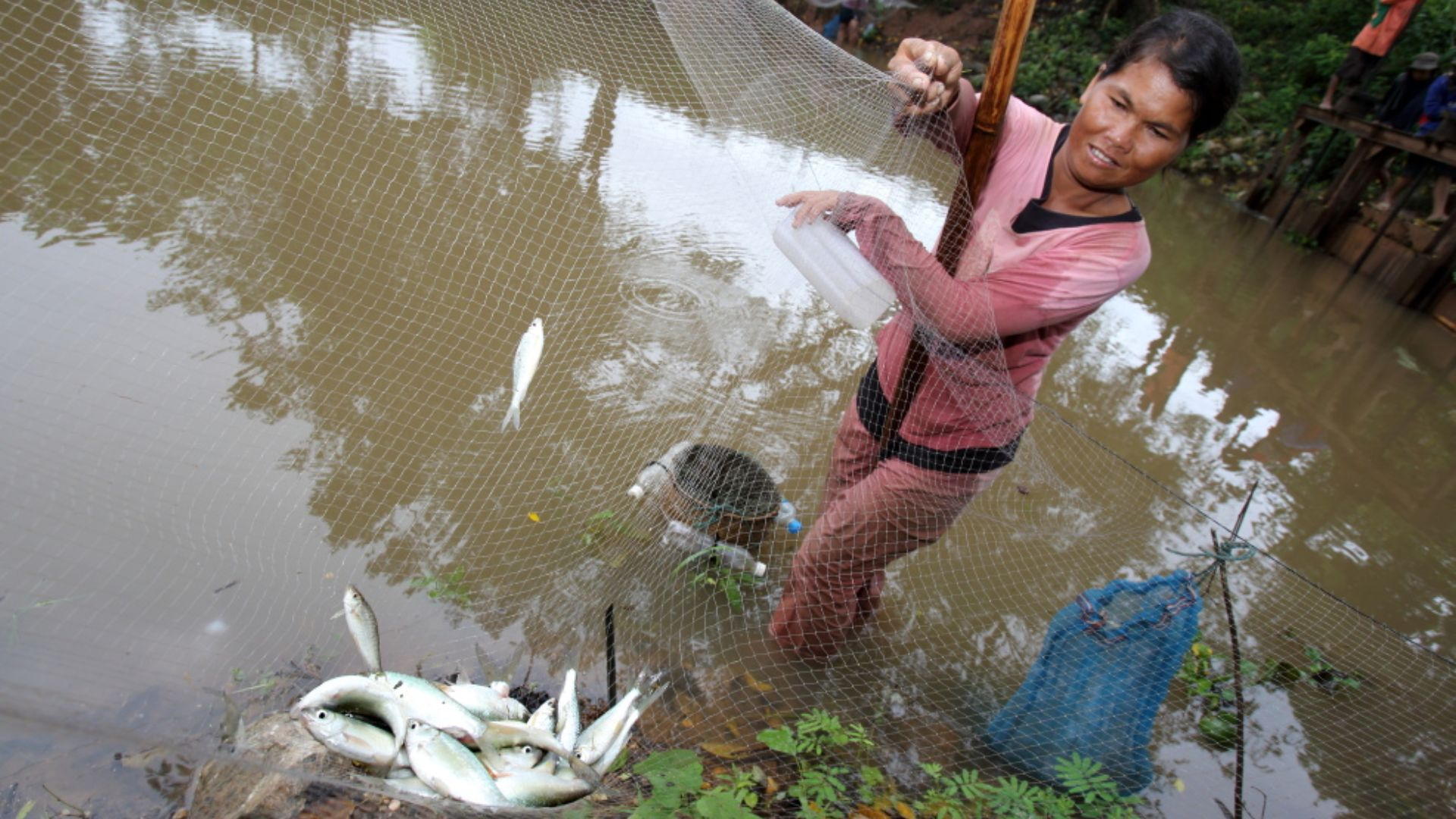 Australian researchers build 'ladders' in waterways to save Asia's fish