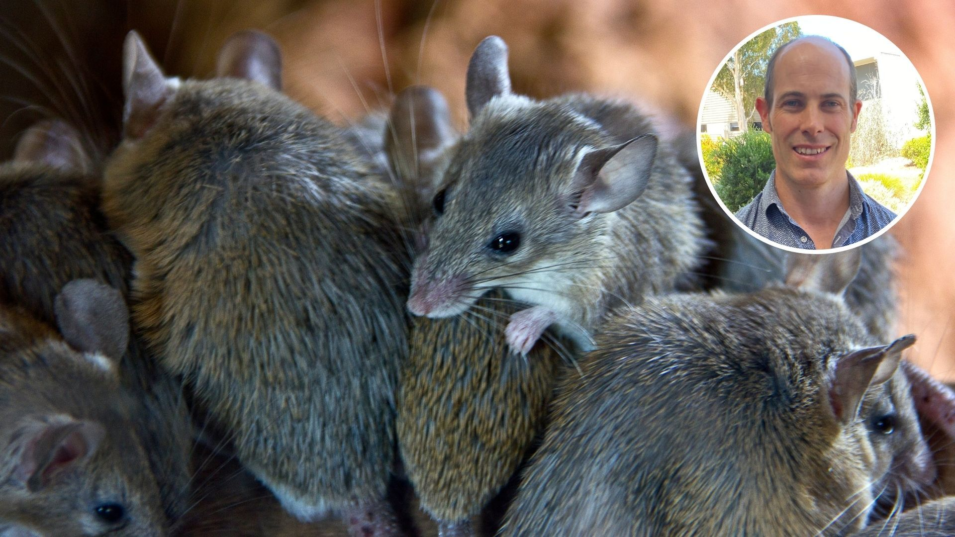 Endless mouse plague poses new threats