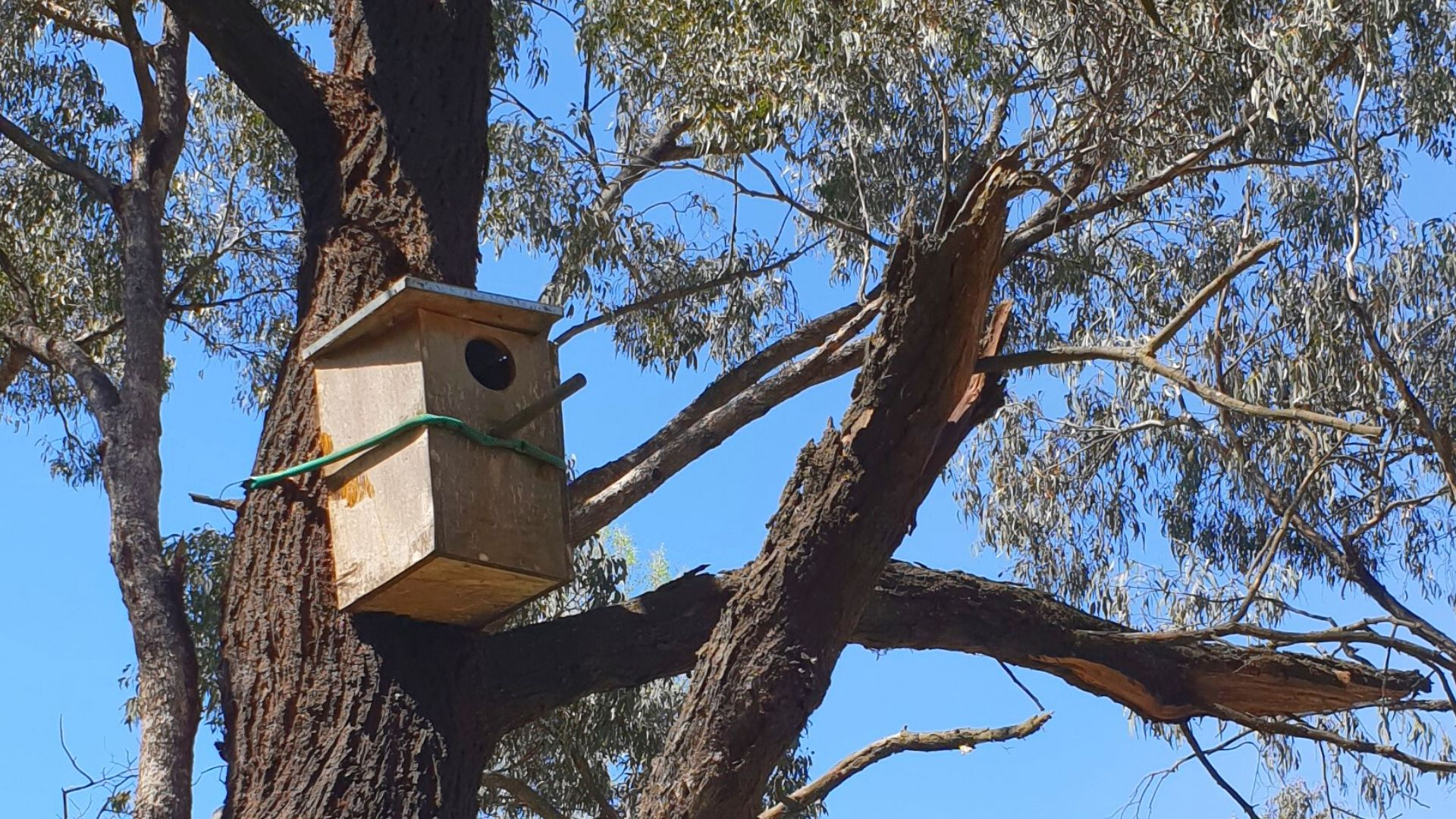 Artificial refuges not always filling the hole in the wildlife housing crisis