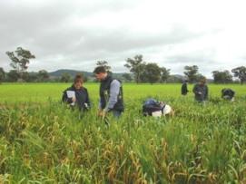 Group of people walking through a crop