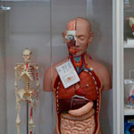 Orange Library Anatomical models and collection